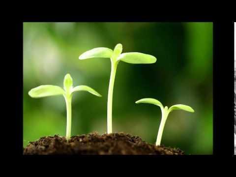 Thiền là soi sáng lại mình trong bối cảnh đời sống