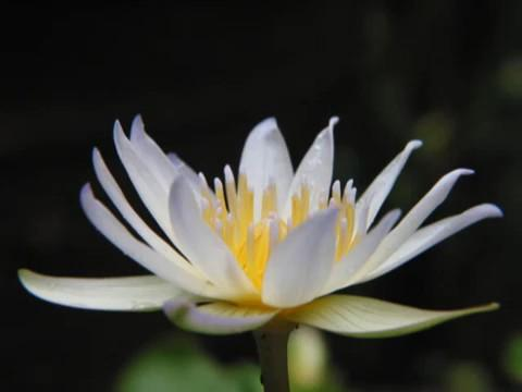Nhạc niệm Phật 10