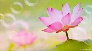 Nhạc Niệm Phật (Không Lời) (Rất Hay)