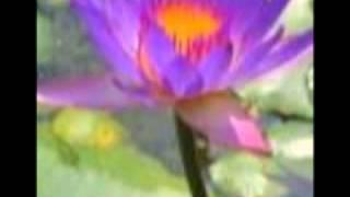 Compassion of the Buddha - Buddhist song