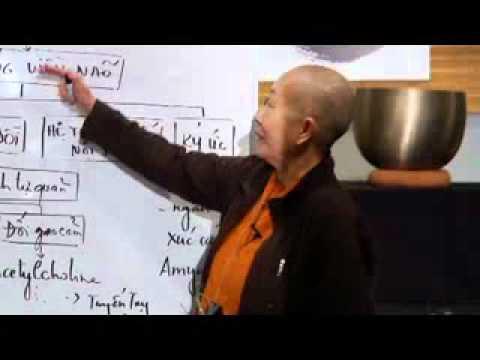 Hồi Đáp Sinh Học Trong Thiền - The Biofeedback Process in Meditation