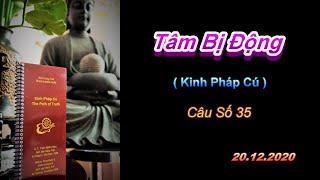 Tâm Bi ̣Động - Thầy Thích Pháp Hòa (Tv.Trúc Lâm.Ngày 20.12.2020)