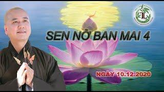 Sen Nở Ban Mai 4 - Thầy Thích Pháp Hòa (Tv Trúc Lâm, ngày 10.12.2020)