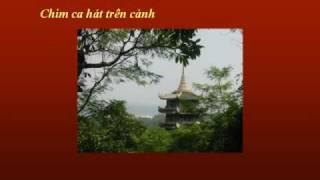 MÙA HOA ĐẠO - Nhạc Võ Tá Hân - Thơ Thích Tịnh Từ