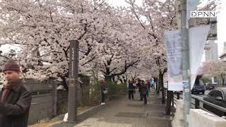 Thầy Nhật Từ cùng quỹ ĐPNN hành hương Hàn quốc 04-2018- Phần 2