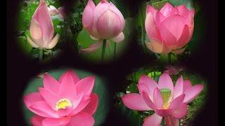 Thiền con đường chứng nghiệm (Phần 2)