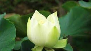 Tâm tịnh Phật độ tịnh (Phần 1)