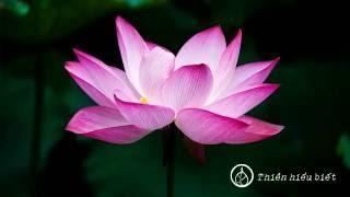 Sư Minh Niệm || Dấu Ấn Pháp Môn || chùa Hoa Nghiêm, Hoa Kỳ || 01.03.2009