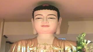 GIEO TRỒNG CĂN LÀNH (1111) - TK. THÍCH NGUYÊN HẠNH (ĐỨC TRƯỜNG)
