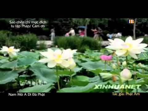 Nhạc Phật Giáo Chế Lời (Karaoke) (Gồm Nhiều Bài) (Kỳ 3)