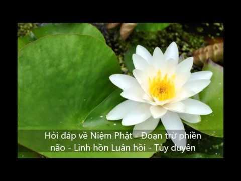 Hỏi đáp: Niệm Phật - Đoạn trừ phiền não - Linh hồn - Luân hồi - Tùy duyên