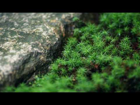 Công Đức Bảo Sơn Đà La Ni (Tiếng Phạn) (Rất Hay) (Dạy Cách Phát Âm Trong Phần Bình Luận)