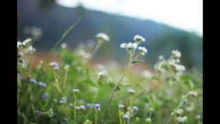 Bát Nhã Tâm Kinh - Bài 01: Tham và vô tham - Thầy Minh Niệm