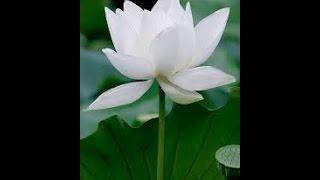 Thiền phương thuốc thần diệu