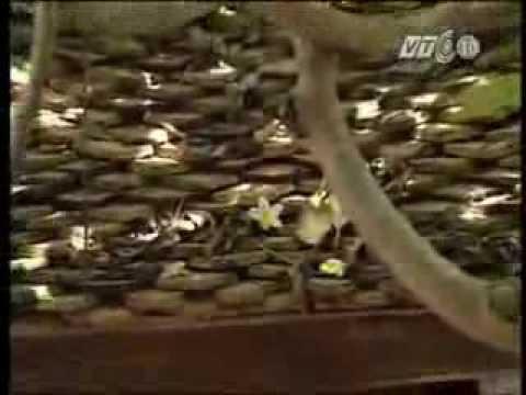 Chùa Dâu đất Phật