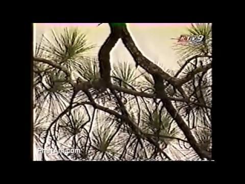 Phim tài liệu: Trúc Lâm Yên Tử - đài HTV9