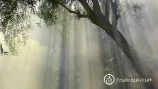 Mộng Tưởng Niết Bàn || chùa Hoa Nghiêm, Hoa Kỳ || 29.01.2010