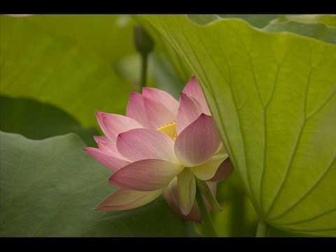 Khuyên Người Niệm Phật 1/31 - Trọn bộ