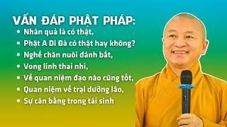 Vấn đáp Phật pháp: Nhân quả là có thật, Phật A Di Đà có thật hay không, nghề chăn nuôi đánh bắt,...