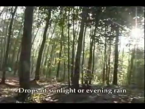 Rừng ơi ! - Forest! -  English Sub
