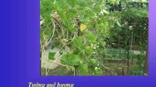 MÓN QUÀ SINH NHẬT - Nhạc Võ Tá Hân - Thơ Trần Huy Sao - Ca sĩ Bảo Yến
