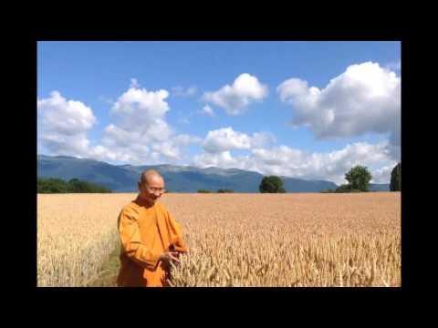 Tính đơn giản (nguyên lý) và đa dạng (vận dụng) của Thiền - Hỏi đáp