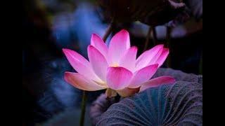 Thiền sư Sayadaw U Jotika - Không thể sống thiếu thiền - Kinh Kalama