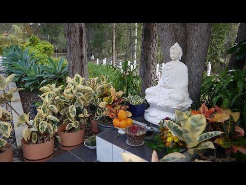 Hỏi đáp 48: Hướng Dẫn Thiền Định