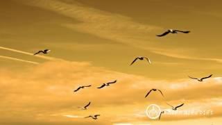 Sư Minh NIệm || Mỗi Giây Phút Đều Là Cơ Hội Để Sống || Bản Hoa Anh Đào || 08.01.2016