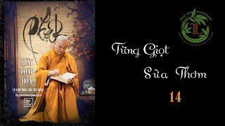 Từng Giọt Sữa Thơm 14 -Thầy Thích Pháp Hòa(Tv Trúc Lâm, Ngày 1.5.2020)