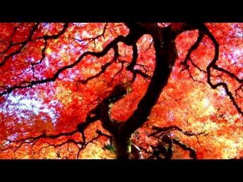 Relax Buddhist Meditation Music ~ Zen Garden ~ Feng Shui