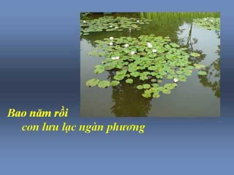 DÂNG MẸ - Nhạc Võ Tá Hân - Thơ Thích Quảng Độ
