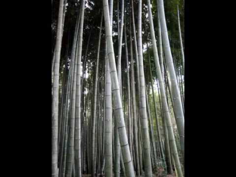 ZEN MIND, BEST RELAXATION MUSIC EVER ---shikisokuzeku by Takeda and RosenBerg