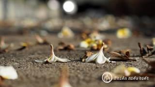 Bớt Tự Ái Bớt Giận Hờn - 01.01.2013
