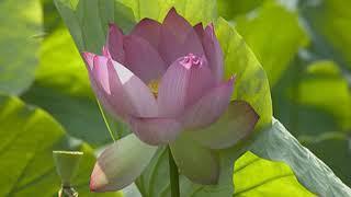 Nhạc niệm Phật 11