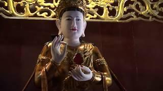 Hòa thượng Thích Bảo Nghiêm tụng kinh Dược Sư tại chùa Hòa Phúc