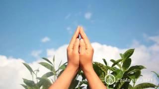 Hãy đưa Thiền vào thực đơn mỗi ngày của bạn