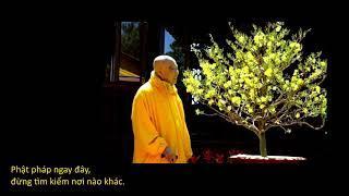 Phật pháp ngay đây đừng tìm nơi nào khác