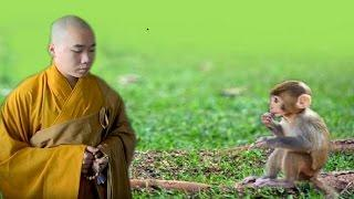 Lòng Bao Dung
