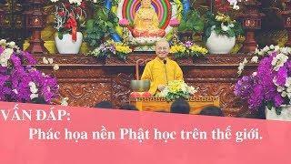Vấn đáp: Phác họa nền Phật học trên thế giới | Thích Nhật Từ