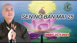 Sen Nở Ban Mai 25 - Thầy Thích Pháp Hòa (Tv.Trúc Lâm.Ngày 20.4.2021)