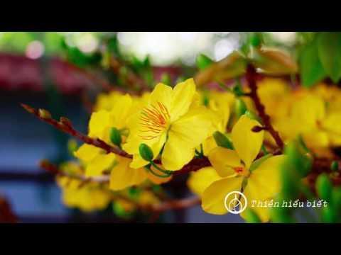 Bốn Mùa Thay Lá || chùa Hoa Nghiêm, Hoa Kỳ || 03.02.2013