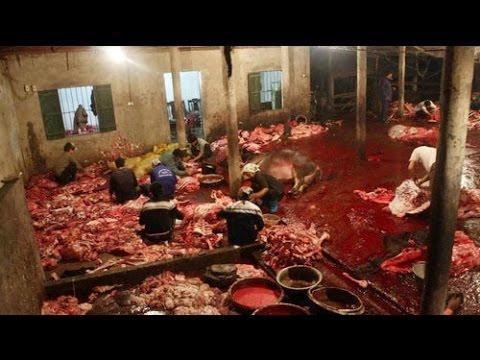 Nói Không Với Thịt Chúng Sanh