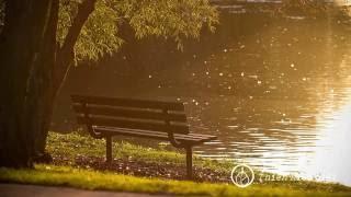 Sư Minh Niệm || Ngày Xa Xưa Ấy Biết Đâu Mà Tìm || Bản Hoa Anh Đào || 09.02.2016