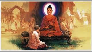 (5-5) Kinh Nghiệm Niệm Phật và Những Chuyện Luân Hồi - Diệu Âm Diệu Ngộ