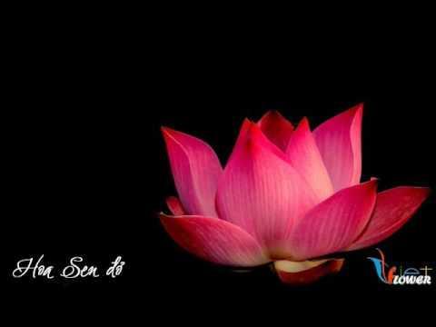 Theo Dấu Chân Phật
