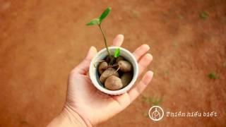 Bớt Can Thiệp Vào Những Gì Ta Đang Tiếp Xúc || Bản Hoa Anh Đào || 21.10.2015