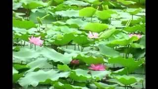 """Nhạc Niệm Phật 4 Chữ """"A Di Đà Phật"""" (Mới, Rất Hay)"""