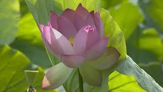 Nhạc niệm Phật 24