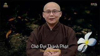5 PPP Số 248 | Chớ Đợi Thành Phật